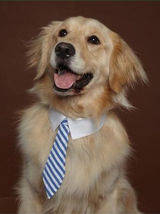 gravatas-2