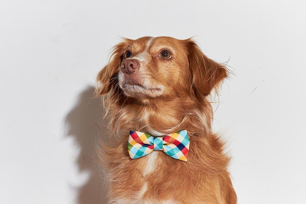 gravatas-4